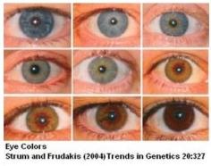 Thegeneticsofeyecolor