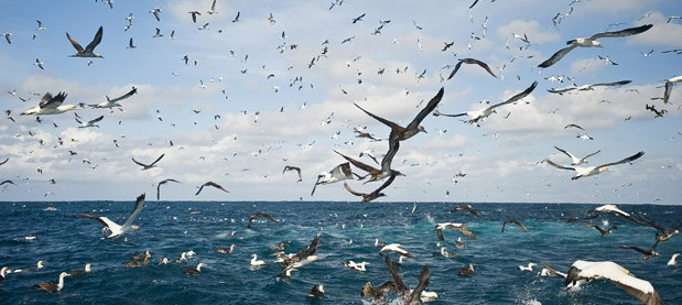 birds-above-water_1500173i.jpg