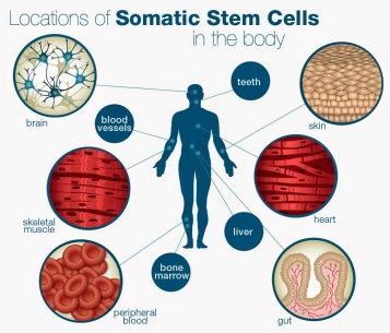 somaticstemcells