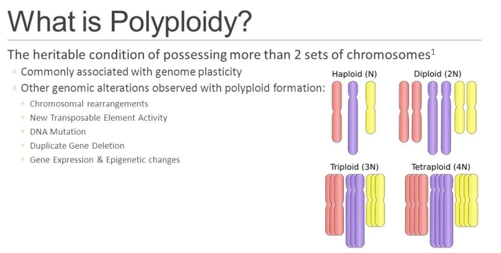 whatispolyploidytheheritableconditionofpossessingmorethan2setsofchromosomes1.commonlyassociatedwithgenomeplasticity.
