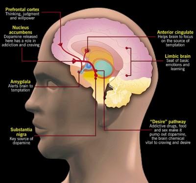 brain2-400x373
