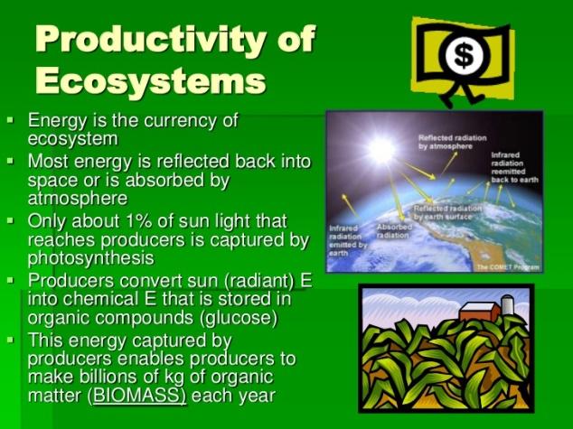ecology-3-energy-and-ecology-ecological-pyramids-2-728