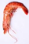 pink-shrimp-kcrw