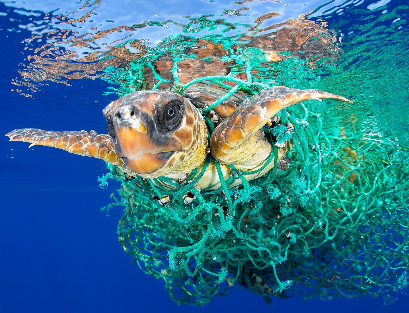 ocean-plastic-pollution