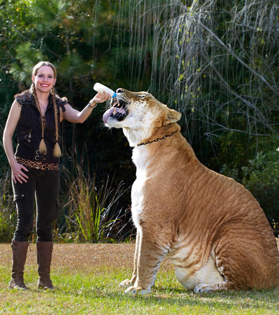 tdfde9e_giganten-im-tierreich-dieser-liger-kreuz
