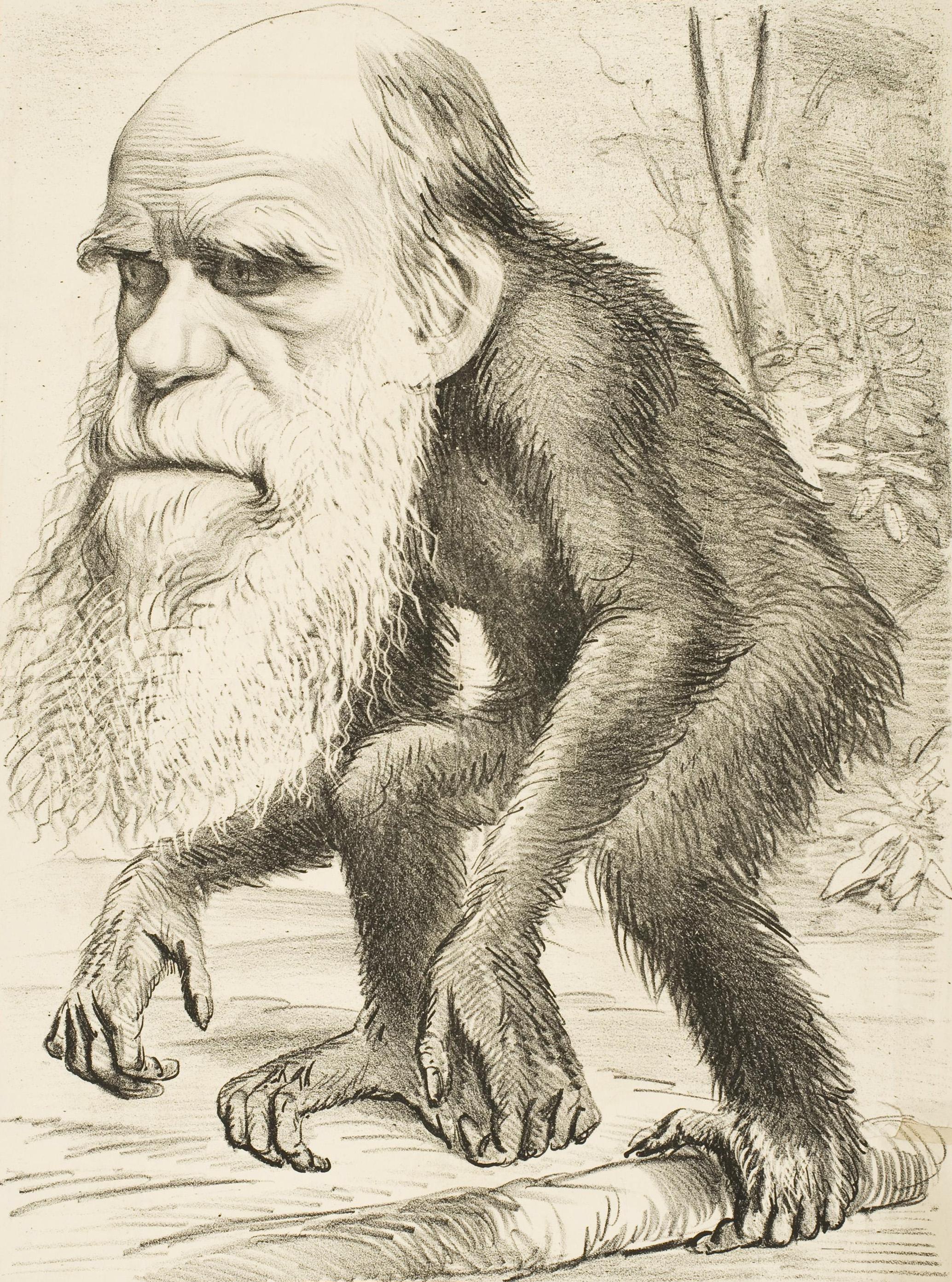 editorial_cartoon_depicting_charles_darwin_as_an_ape_28187129